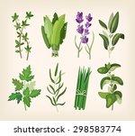 green fragrant seasoning and... | Shutterstock .eps vector #298583774