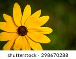Yellow Black Eyed Susan...