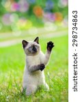 Stock photo cute funny kitten playing and begging on the grass staying 298734863