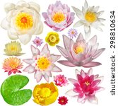 big collection of water lily... | Shutterstock . vector #298810634