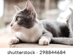 Stock photo cute cat is relaxing on the wooden 298844684