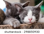 Stock photo cute cats are sleep together on the wooden 298850930