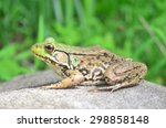 green frog profile | Shutterstock . vector #298858148
