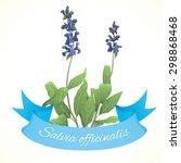 vector illustration of sage... | Shutterstock .eps vector #298868468