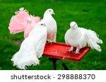Decorative Pigeons Sit On The...