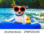 jack russell dog sitting on an... | Shutterstock . vector #298920140