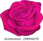 Beautiful Colorful Pink Rose...