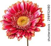 vector illustration of bright... | Shutterstock .eps vector #298952480