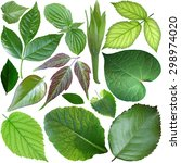 set of green leaf isolated on... | Shutterstock . vector #298974020
