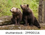 Two Bears Sitting On The Rock ...