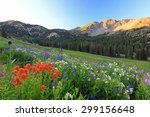 Mountain Meadow With...