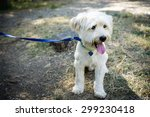 Stock photo sitted dog with leash 299230418