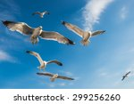 Beautiful Seagulls Flying In...