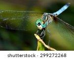 Macro Close Up Image Of A...