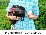 The Young Worker Of Poultry...