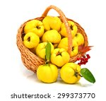 ripe quince in the basket... | Shutterstock . vector #299373770