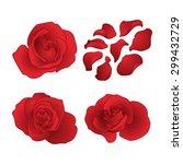Stock vector vector roses and petals set 299432729