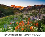 Wildflowers At Albion Basin ...