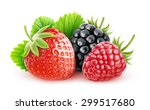 isolated berries. fresh... | Shutterstock . vector #299517680