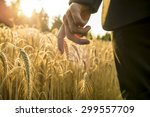 Small photo of Businessman walking through a golden wheat field touching an ear of ripening wheat at sunset backlit by the golden sun. Conceptual of turning back to nature for inspiration, energy and peace of mind.