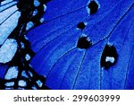 Blue Butterfly Wings
