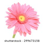 Beautiful Pink Gerbera Flower...