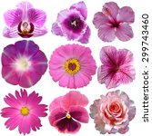 set of pink flowers isolated on ... | Shutterstock . vector #299743460