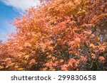 beautiful floral   Shutterstock . vector #299830658