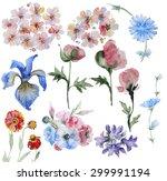 set of handpainted watercolor... | Shutterstock . vector #299991194