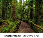 A rainy day at Cathedral Grove near Tofino, Vancouver Island, British Columbia - stock photo