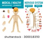 nervous system. sympathetic... | Shutterstock .eps vector #300018350
