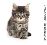 Stock photo cute baby tabby domestic shorthair kitten playing and isolated on white background 300039674