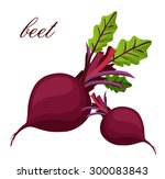 beets on a white background | Shutterstock .eps vector #300083843