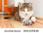 Stock photo playful kitten laying on a floor playing with a mouse toy 300109838