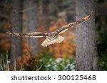 Flying Eurasian Eagle Owl In...