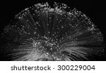 black and white of optical... | Shutterstock . vector #300229004