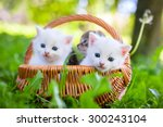 Stock photo group of little kitten in a basket on the grass 300243104