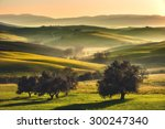 Tuscan Fields And Olive Trees...