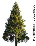 Stock photo fir tree isolated on white 300280106