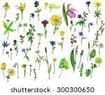 biggest set of watercolor... | Shutterstock . vector #300300650