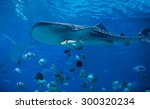 Underwater View Of Whale Shark...