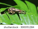 insect on the leaf | Shutterstock . vector #300351284