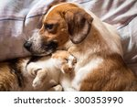 Stock photo dog and cat cuddle on bed 300353990