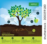 Apple  Infographics. Fruits...