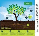 Apple  Infographics. Fruits...