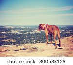 A Dog Sitting On A Mountain Top ...