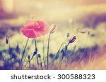 field of corn poppy flowers... | Shutterstock . vector #300588323