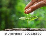 hand nurturing and watering a... | Shutterstock . vector #300636530