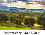 the cultivation of olive trees... | Shutterstock . vector #300806804