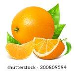 fresh ripe oranges with leaves. ... | Shutterstock .eps vector #300809594
